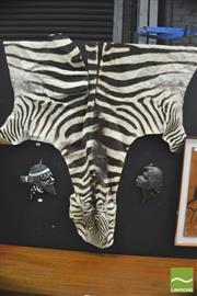 Sale 8310 - Lot 1022 - Worn Complete Zebra Skin Pelt w Large Tear