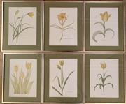 Sale 8510A - Lot 3 - A group of six framed book plates depicting tulips and daffodils, each frame size 47cm x 37cm