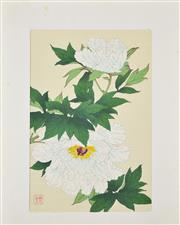 Sale 8330A - Lot 23 - Shodo Kawarazaki (1889 - 1973) - White Peony 36 x 24cm