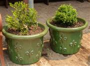 Sale 8871H - Lot 31 - A pair of short French style glazed ceramic planters with green finish planted with buxus, height 48, diameter 58cm (height does not...