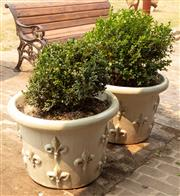 Sale 8871H - Lot 35 - A pair of small French style cream glazed ceramic planters planted with buxus, height 41, diameter 58cm (height does not include plant)