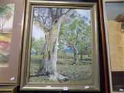 Sale 8437 - Lot 2051 - Harvey G Porter (XX) - River Gums 50 x 40cm