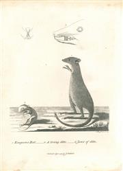 Sale 9037A - Lot 5031 - Artist Unknown - Kangooroo Rat (Wallaby), 1789 copper engraving
