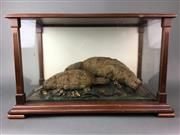 Sale 8638 - Lot 659 - Taxidermy Female Platypus (Ornithorhynchus Anatinus) with Baby Platypus Diorama in Timber Cabinet  Provenance: Owston Collection...