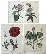 Sale 8752A - Lot 5006 - Group of (3) Vintage Bookprints - i) Wing Stalked Passion Flower ii) Naked -Stalked Poppy iii) The Manchineet Treet 28 x 21cm, each