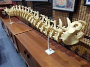 Sale 8705 - Lot 1062 - Large Faux Spine