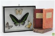 Sale 8603 - Lot 73 - Butterflies In Frame Together With Zoomorphic Slides