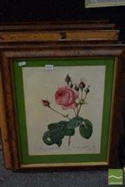 Sale 8518 - Lot 2043 - Set of 9 Early Botanical Prints, frame size approx. 54 x 44cm