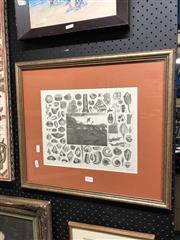 Sale 8797 - Lot 2076 - Framed Engraving 12/1000, Shells, Henry Winkles