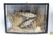 Sale 8490 - Lot 137 - Framed Diorama of Fish