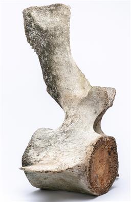 Sale 9191H - Lot 72 - A whale vertebrae, height 60, width 61cm