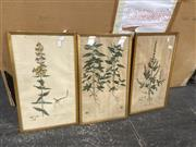Sale 9087 - Lot 2080 - 3 Early Engravings: Atriplex hastata, Mercurialis annua & Hypericum hirsutum -