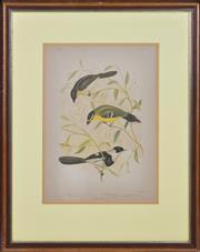 Sale 8349A - Lot 107 - John Gould (1804 - 1881) - Flycatchers (Plate PLXXXVII) 33 x 23cm