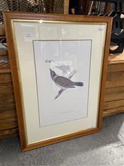 Sale 8990 - Lot 2073 - John Gould decorative print, frame: 79 x 59 cm)
