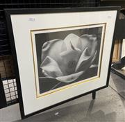 Sale 9050 - Lot 2033 - 2 works, Christian Dior print and artist unknown, decorative floral print, largest frame: 89 x 62 cm