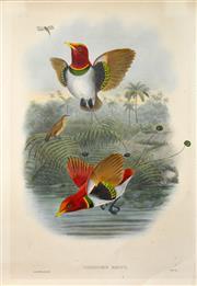 Sale 8382 - Lot 573 - John Gould (1804 - 1881) - CICINURUS REGIUS 54.5 x 37cm (sheet size)