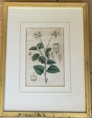 Sale 8510A - Lot 38 - A pale lilac pansy watercolour with 18ct gold leaf Minky Grant in gilt frame, frame size 17cm x 17cm together with a print after W F...