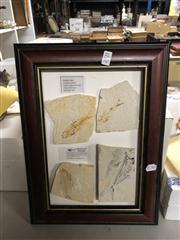 Sale 8819 - Lot 2321 - Set of Framed Fossils