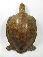 Sale 8331A - Lot 515 - Antique Taxidermy Turtle