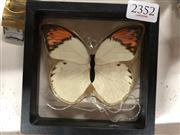Sale 8819 - Lot 2352 - Butterfly on a Chain, in resin