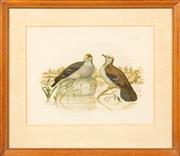 Sale 8653A - Lot 14 - A collection of five early ornithological prints, artists include Gould, each approx. 25 x 33cm