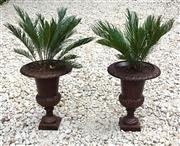 Sale 8706A - Lot 3 - A pair of cast iron urns with well established cycad plants, Urn H 60 x D 46cm