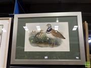 Sale 8407T - Lot 2014 - John Gould (1804 - 1881) - Little Bustard 32 x 38cm