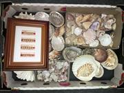 Sale 8567 - Lot 669 - Assortment of Sea Shells; t/w 24 Framed Teeth