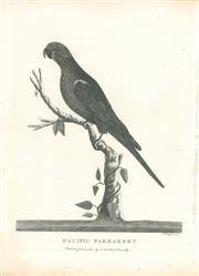 Sale 9037A - Lot 5008 - Peter Mazell (1733 - 1808) - Pacific Parakeet (Musk Lorikeet), 1789 copper engraving