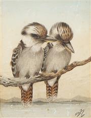 Sale 8755 - Lot 565 - Neville Cayley (1853 - 1903) - Kookaburras, 1890 27.5 x 21cm