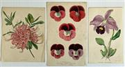 Sale 8894A - Lot 5029 - 3 Floral engravings, each various sizes (unframed)