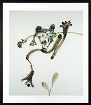 Sale 8620A - Lot 1 - John Olsen (1928 - ) - Hanging tree frog image size 63 x 55cm, framed size 78 x 68cm