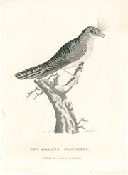 Sale 9037A - Lot 5009 - Peter Mazell (1733 - 1808) - New Holland Goatsucker (Australian Owlet-nightjar), 1789 copper engraving