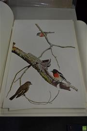 Sale 8578T - Lot 2066 - Collection of Decorative Prints of Birds (various sizes, unframed)