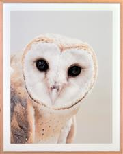 Sale 8342A - Lot 35 - Artist Unknown - Barn Owl
