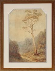 Sale 8949 - Lot 2033 - Lionel David (Early C20th) - Majestic Gum and Old Trail 63 x 44 cm (frame: 84 x 65 x 3 cm)
