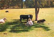 Sale 8813 - Lot 517 - John Earle (1955 - ) - Resting Cows by the Tree 32 x 47cm