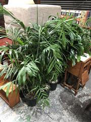 Sale 8822 - Lot 1854 - Collection of Indoor Plants
