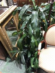 Sale 8822 - Lot 1865 - Collection of Indoor Plants