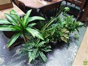 Sale 8601 - Lot 1486 - Collection of Small Indoor Plants