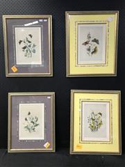 Sale 8953 - Lot 2050 - Set of (4) hand-coloured Antique Botanical Plates, 51 x 41cm (2); 53 x 43cm (2)