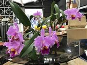 Sale 8787 - Lot 1098 - Flowering Orchid