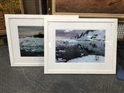 Sale 8754 - Lot 2052 - Pair of Original Photographs of Antarctic Wildlife, frame 67.5 x 87cm.