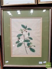 Sale 8491 - Lot 2025 - Artist Unknown - Still Life (Magnolia) 32 x 24.5cm