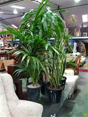 Sale 8601 - Lot 1402 - Collection of Indoor Plants