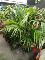 Sale 8601 - Lot 1035 - Collection of Indoor Plants