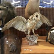 Sale 8758 - Lot 14B - Taxidermy Owl on Stand
