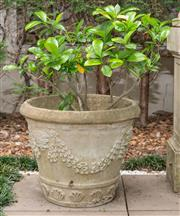 Sale 8644A - Lot 4 - A pair of composite stone circular planters with masks, swags and shells, height of each pot 42cm, planted with gardenia and another.