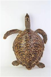 Sale 8818N - Lot 717 - Taxidermied Green Sea Turtle (Some Damage)