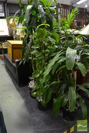 Sale 8472 - Lot 1031 - Collection of Indoor Plants